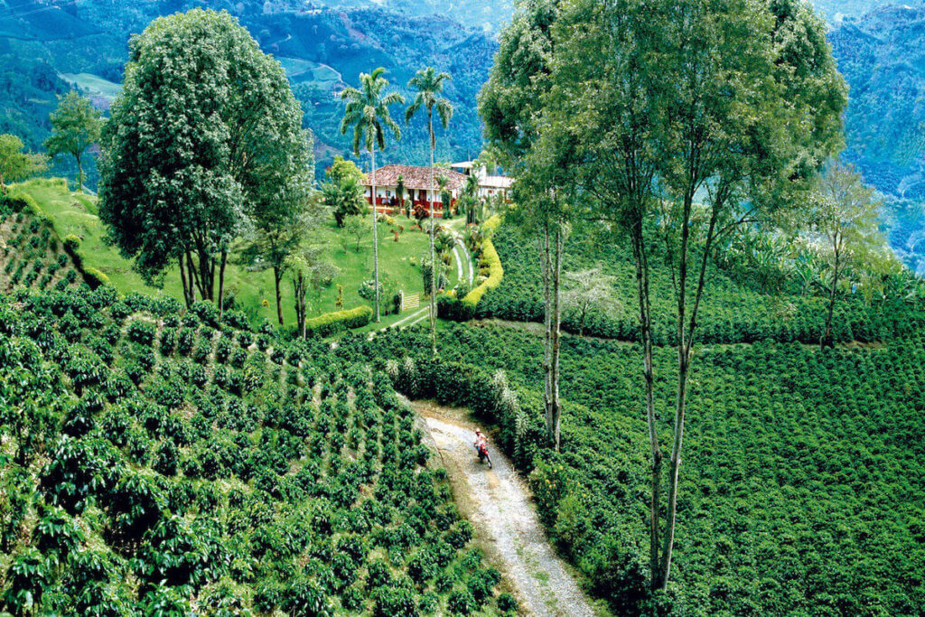 coffee region