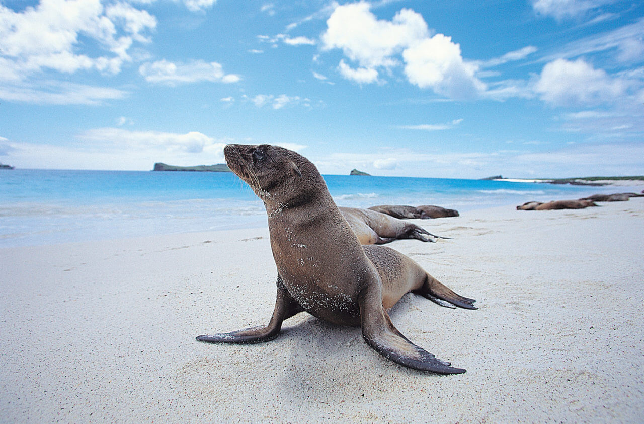 Seal Galapagos Islands | Plan South America