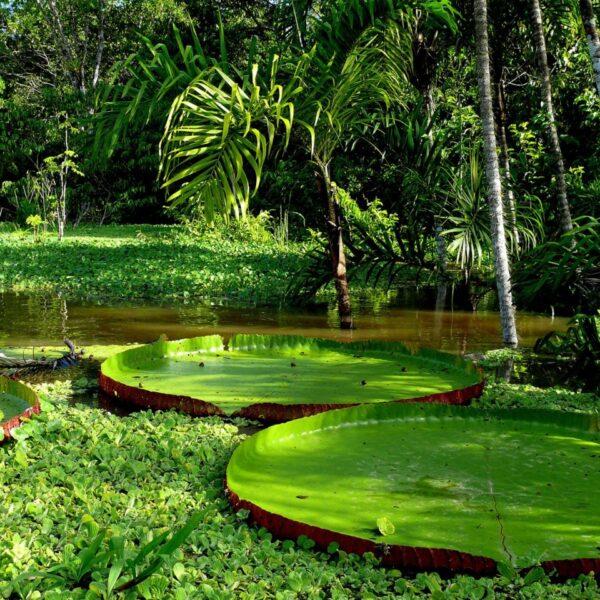 The Peruvian Amazon