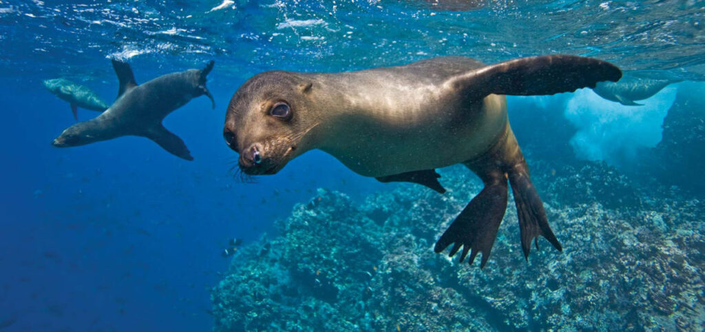The Galapagos | Blowing Bubbles With Sea Lions