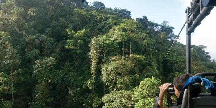 Cloud Forest Tour in Ecuador Mashpi | Plan South America