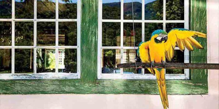 Ibitipoca Bird Life