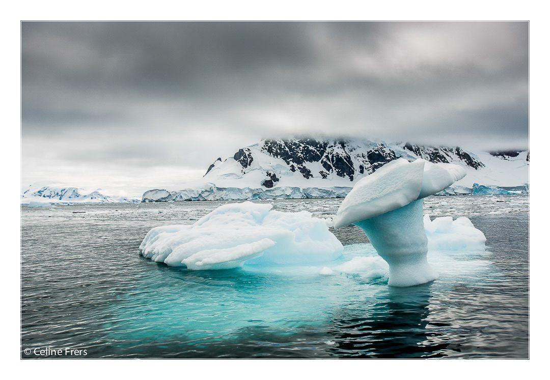 Celine Frers Antarctica