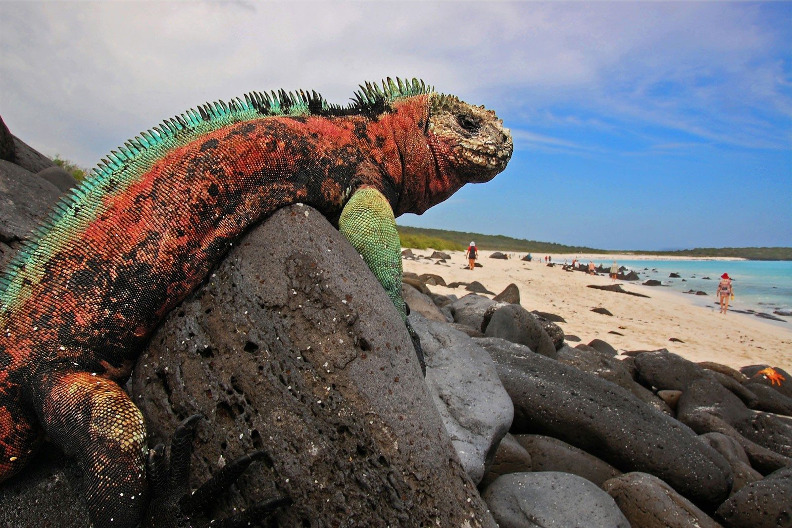 Iguana Galapagos | Plan South America