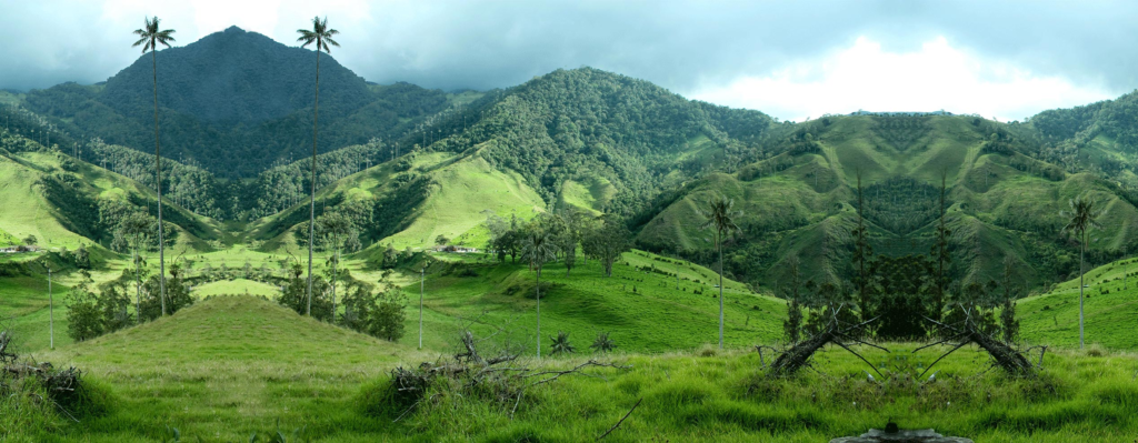 green-belt-forest-andes