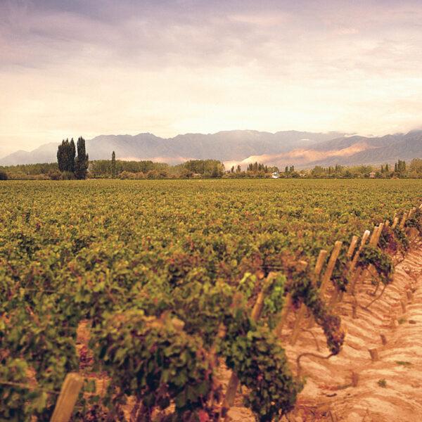 Mendoza & Wine Country