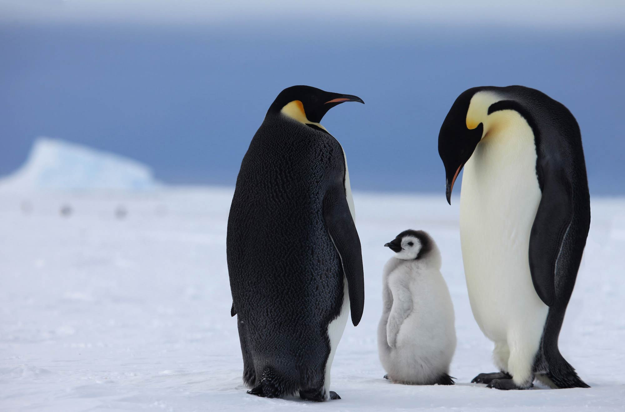Penguins, Antarctica | Plan South America