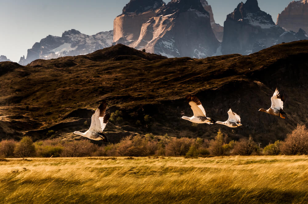 Birdlife at Awasi Patagonia