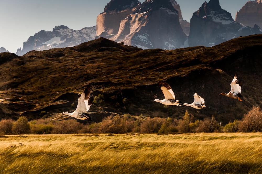 Birdlife at Awasi Patagonia