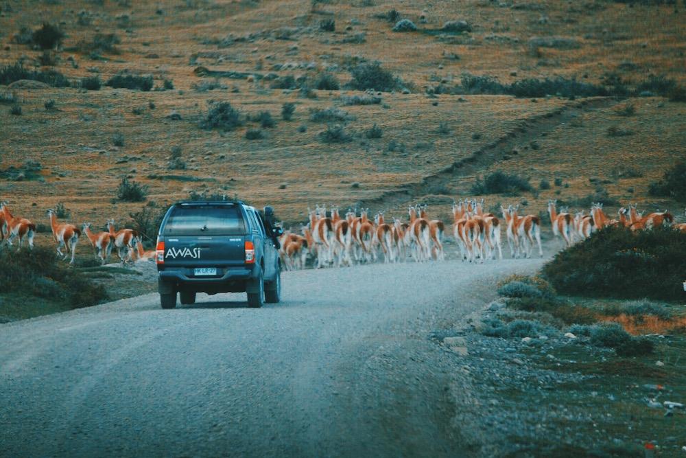 Private Guiding at Awasi Patagonia