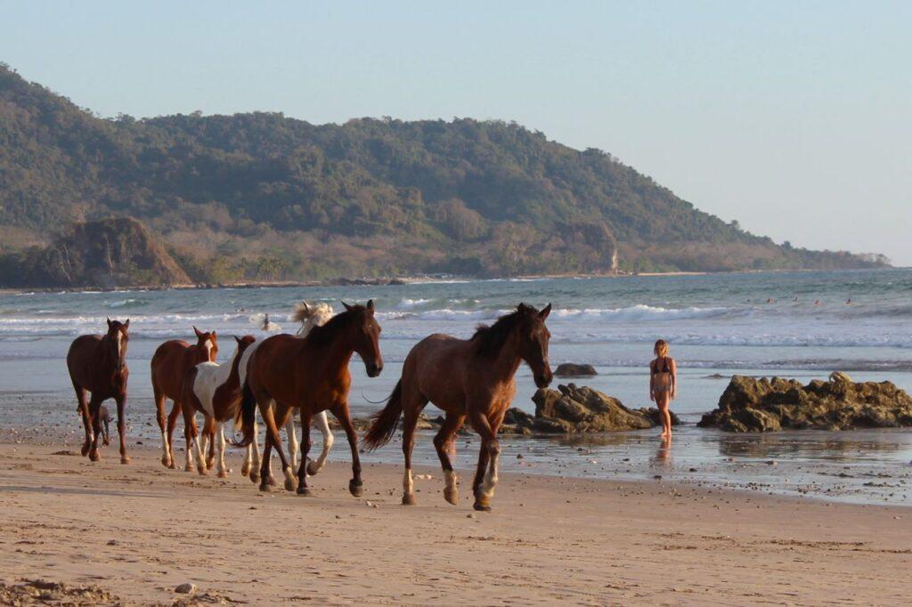 Horse Riding - Santa Teresa, Costa Rica