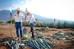 La Rojena distillery Mexico