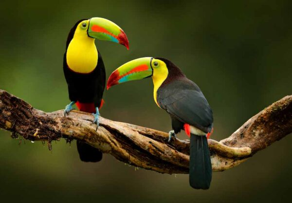 Discovering Costa Rica & Belize