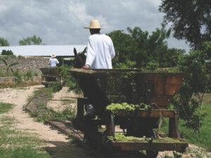 Hacienda Sotuta de Peon, Yucatan Peninsula, Mexico