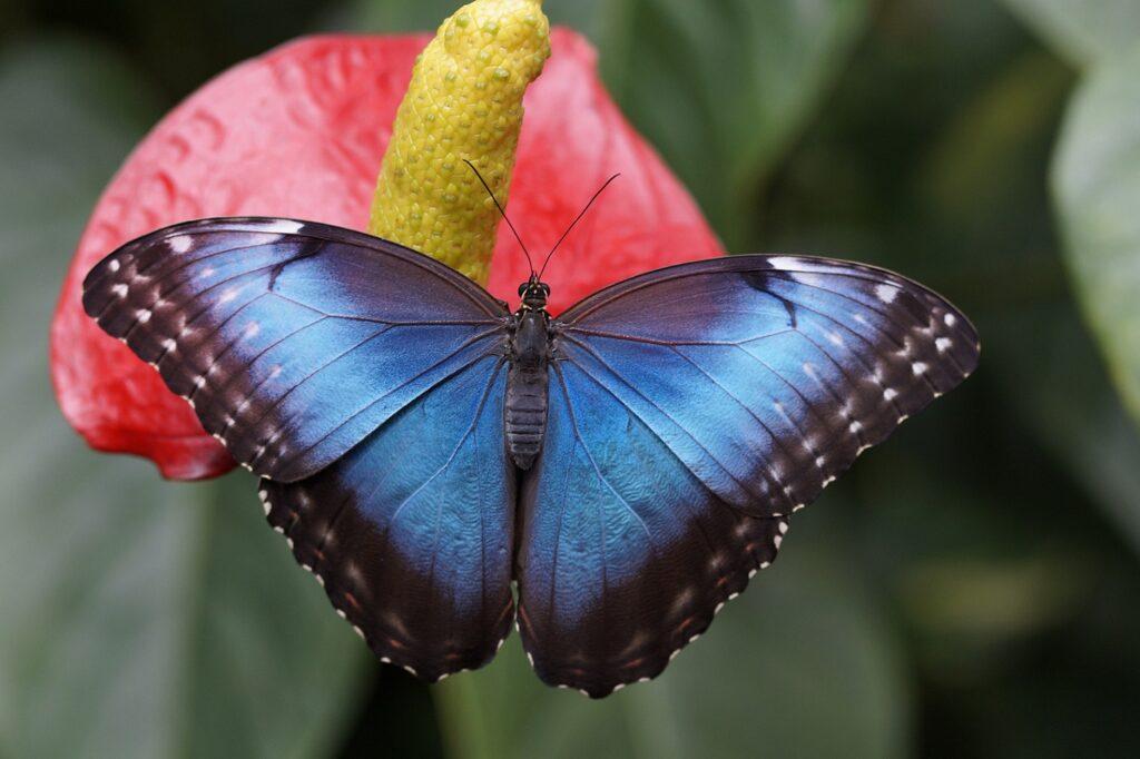 Osa Peninsula Costa Rica Butterfly