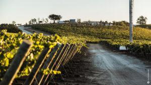 Vineyard Views, Matetic, Wine Region, Chile