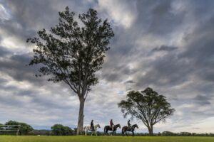 Estancia Zarate, Argentina - Horses