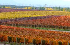 Casa de Uco, Mendoza, Argentina - Vineyards
