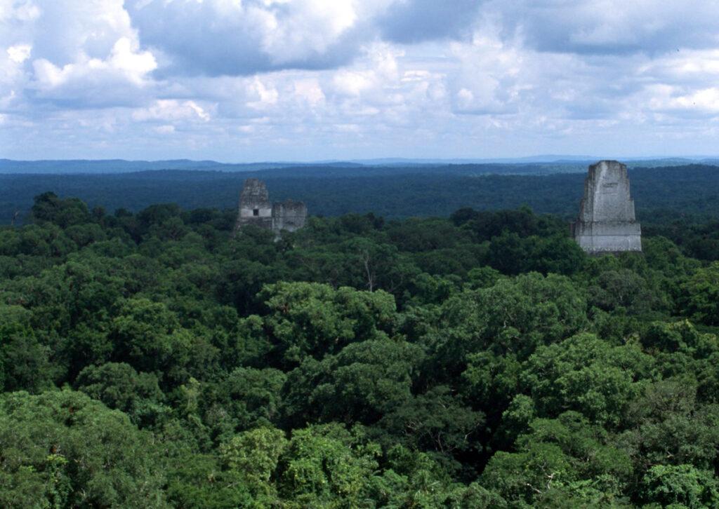 Tikal canopy view - Guatemala