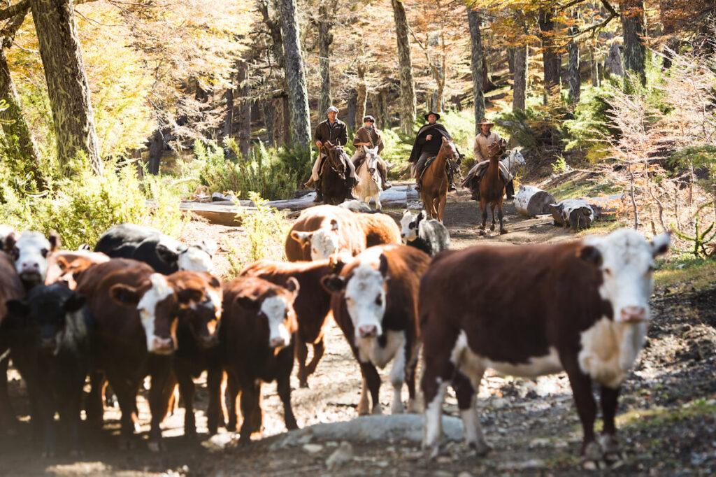 Caballadas Argentina Cattle Herding