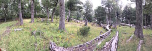 Caballadas, Argentina - fallen trees