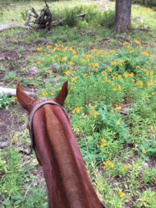 Riding through wildflowers at Caballadas, Argentina
