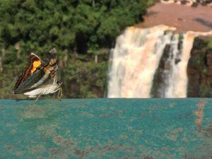 Kendall Iguazu Falls Butterfly
