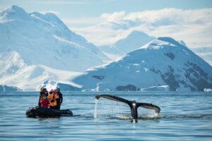 Legend Antarctica, whale sighting in zodiac