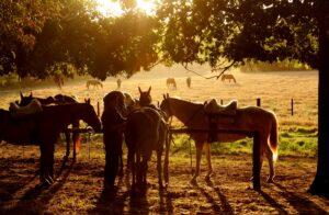 Estancia El Boqueron, Argentina - Horse Riding