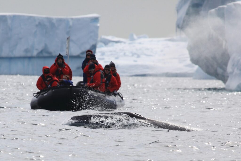 Silver Explorer, Antarctic Cruise - Zodiac Wildlife Viewing