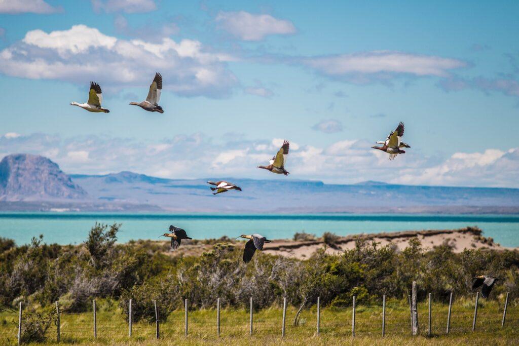 Estancia La Maipu - Patagonia, Argentina - Birdlife
