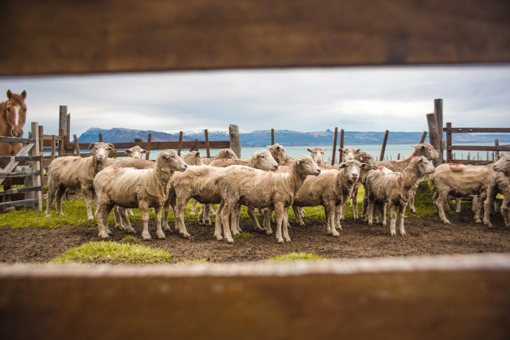 Estancia La Maipu - Patagonia, Argentina - Sheep Farm