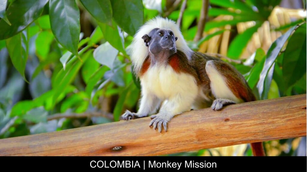 Colombia Monkey Mission - Travel With Purpose