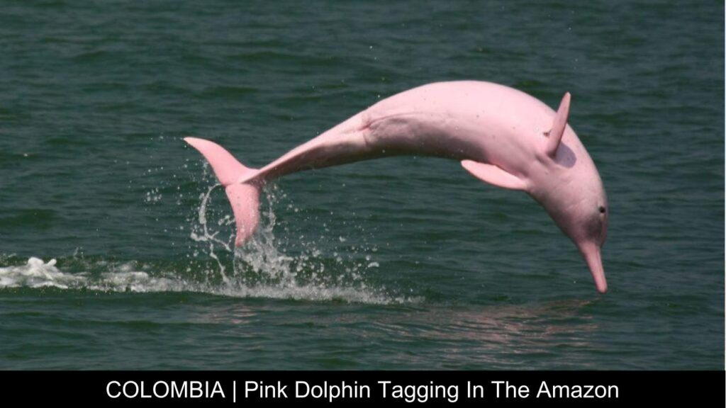 Colombia Pink Dolphin Tagging - Travel With Purpose