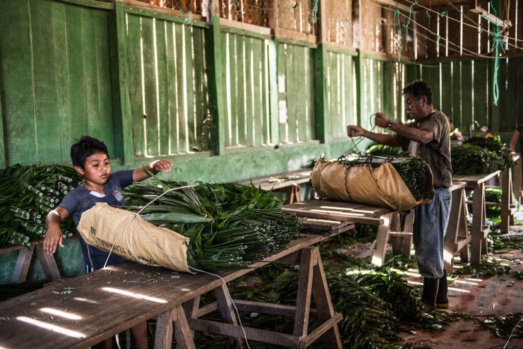 Uaxactun, Guatemala - Mayan Village Work