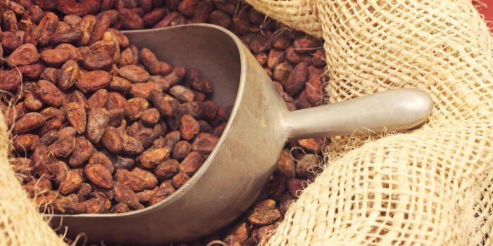 To'ak chocolate Ecuador - dry beans