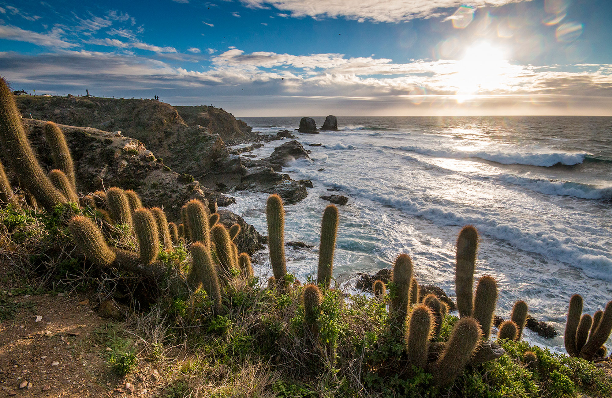 Natural surroundings at Punta de Lobos.