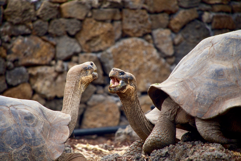 Plan South America | Giant tortoises, Galapagos