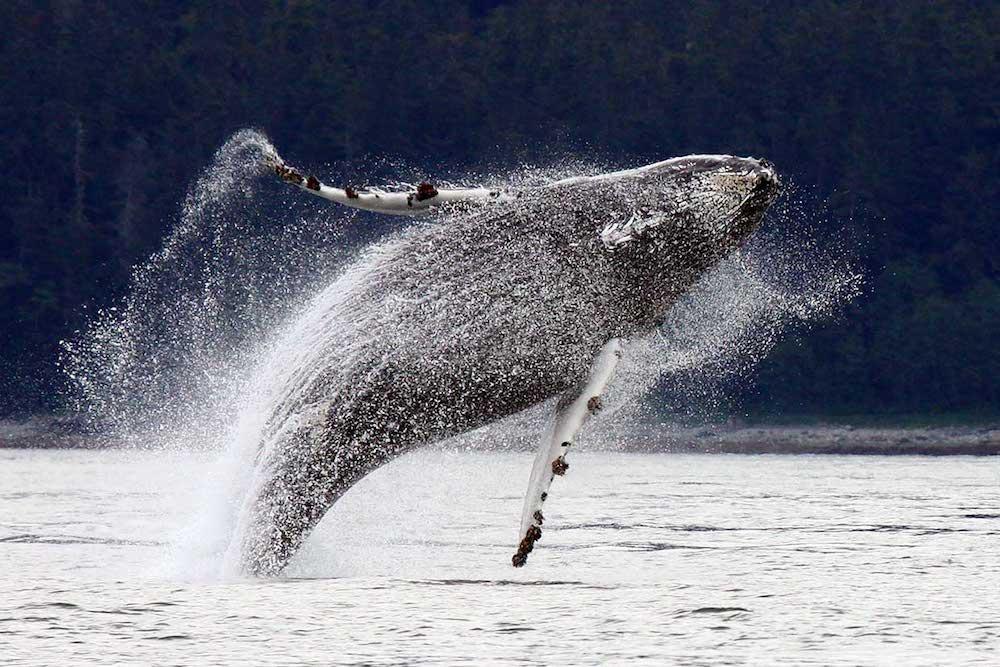 Whale Season, El Chocó, Colombia