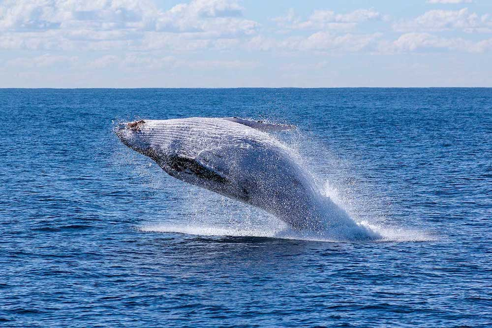 Whale season, El Choco, Colombia | Plan South America