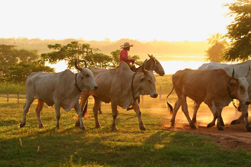 Brazil's Wild Wetland | The Pantanal