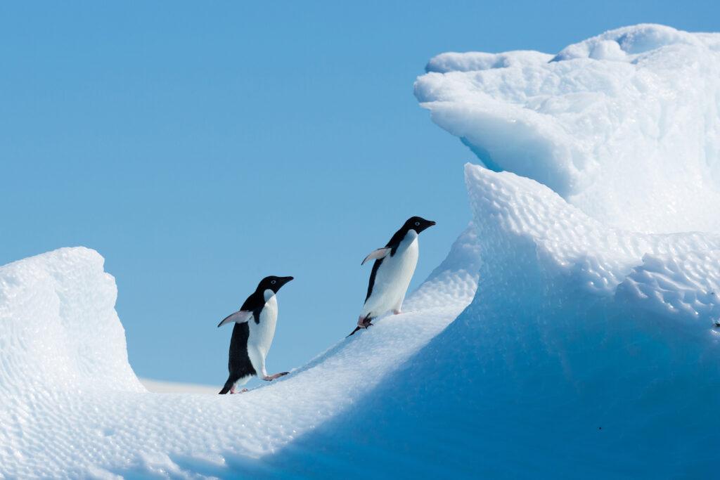 Discover Antarctica Aboard Expedition Ship Magellan Explorer