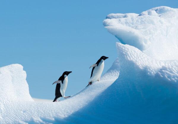 Discover Antarctica Aboard the Magellan Explorer