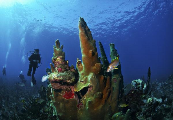 Belize | Island Hopping & Deep Sea Diving
