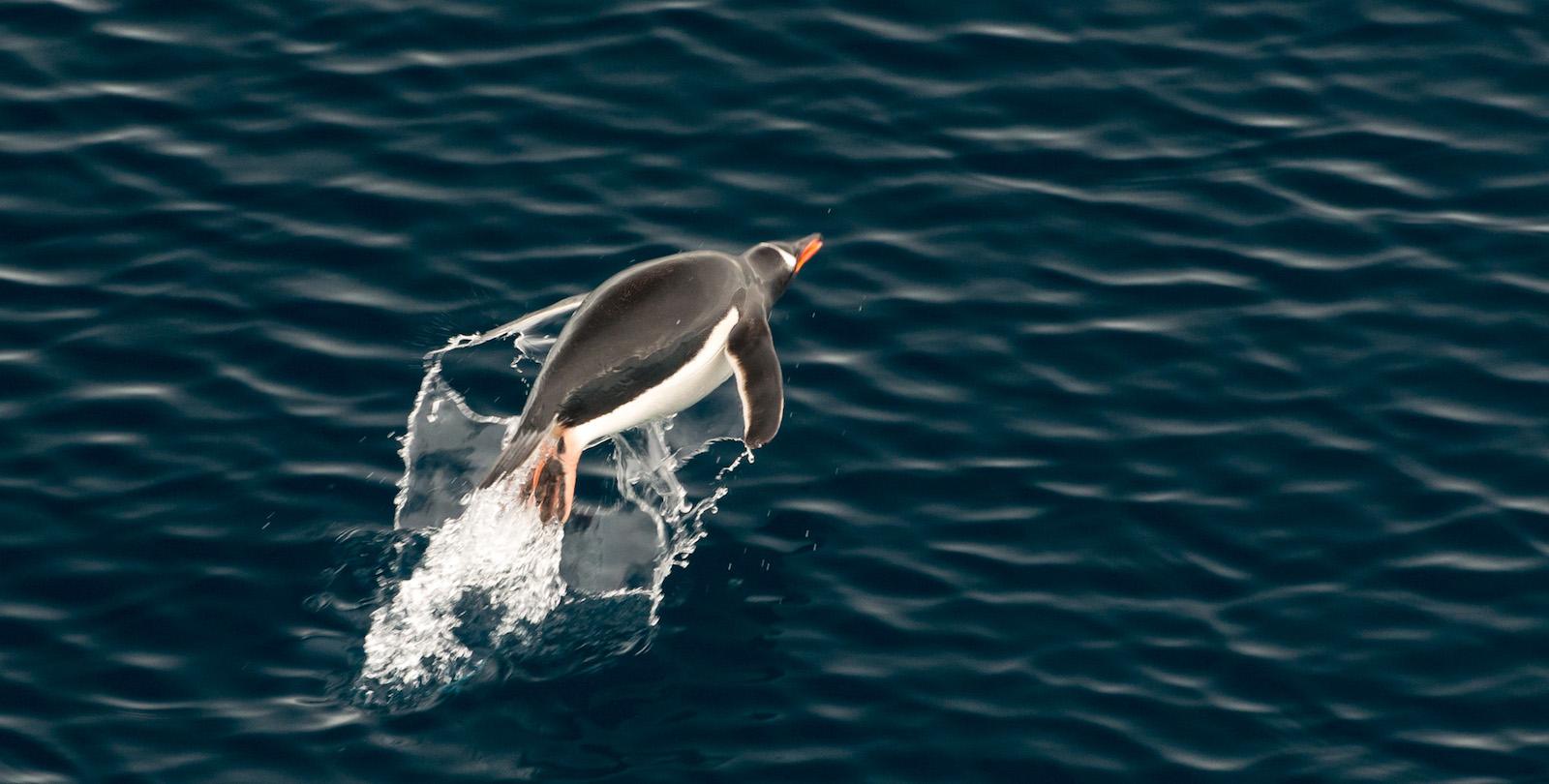 Plan South America   Antarctica wildlife
