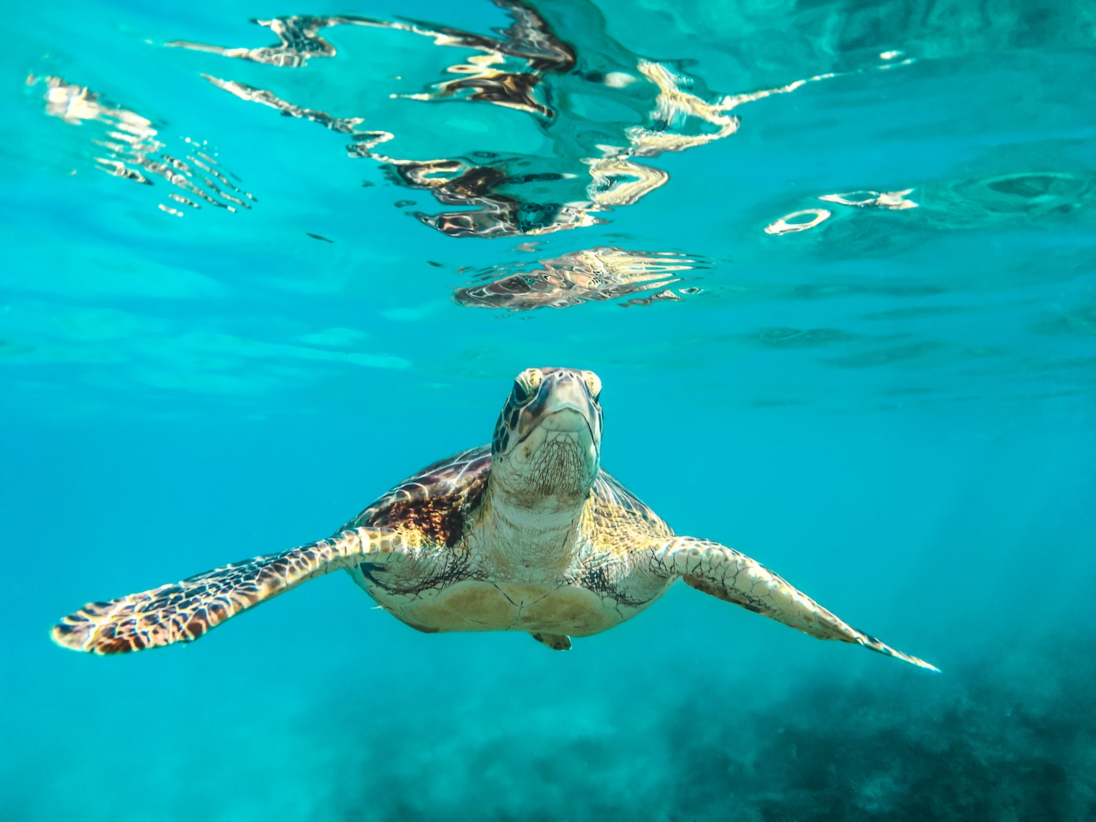 Plan South America | Sea Turtle Conservation