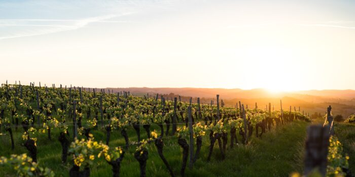 Plan South America | Chilean Wine Region