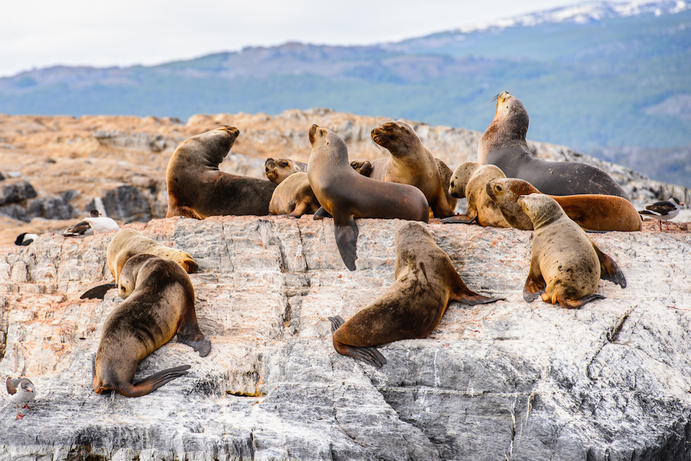 Plan South America | Sea lions, Ushuaia