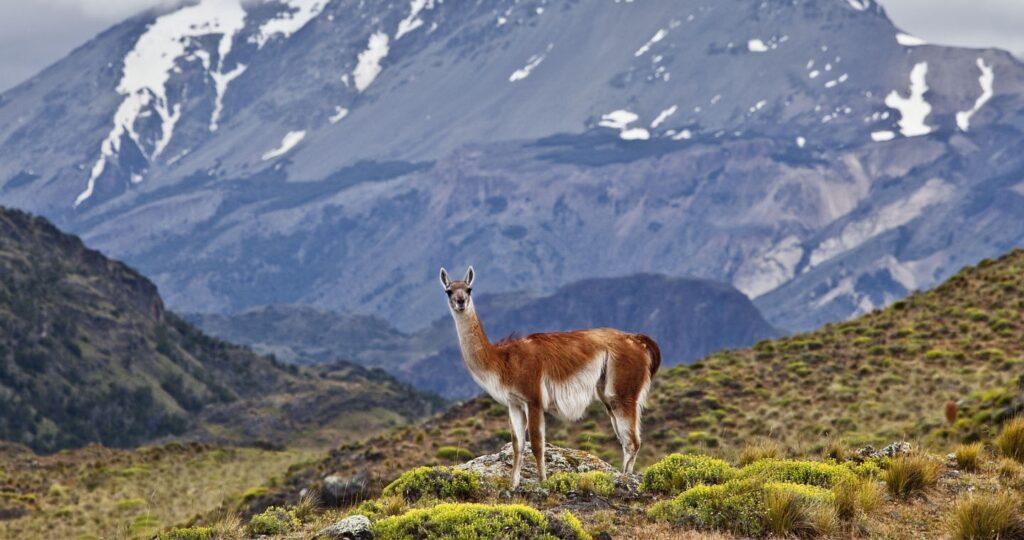 Kris Tompkins | Preserving Patagonia
