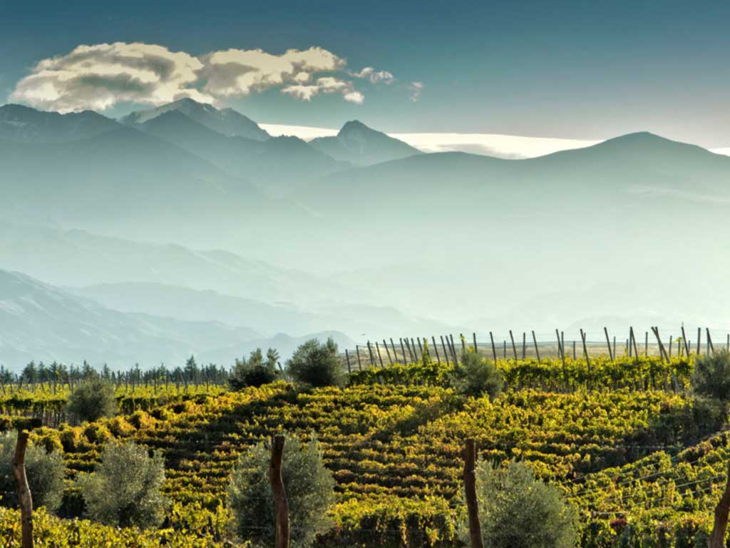Special Projects -Andean Wine Journey